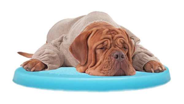 Ultra Pedic® Pet Cushion